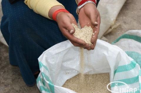 Bolivia-es-el-mayor-productor-de-quinoa.